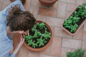 Come coltivare le piante aromatiche in casa
